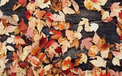 Herbst-Impressionen am Klavier 2019